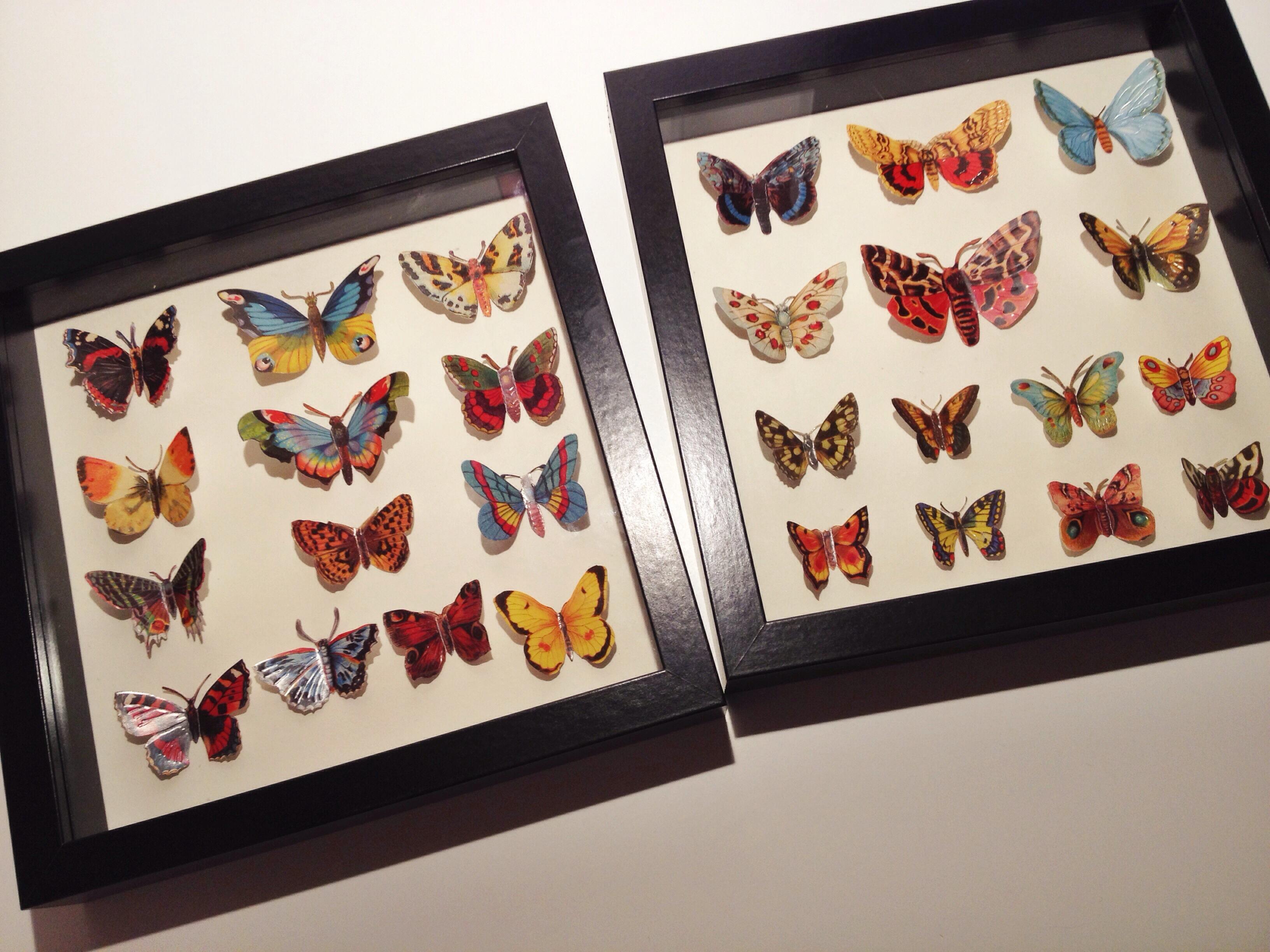 Vlinders in lijstjes   ohlalau